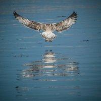 Ptak nad wodą